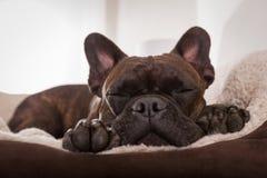 Sueño de la siesta del perro fotos de archivo libres de regalías