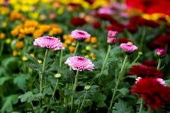 Sueño de las flores foto de archivo libre de regalías