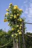 Sueño de los chapiteles Rose fotos de archivo libres de regalías