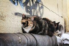Sueño de los gatos en el tubo Imagen de archivo libre de regalías