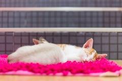 Sueño de los gatos en la alfombra Imagenes de archivo