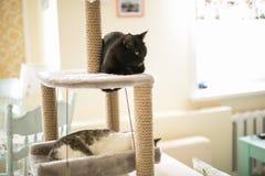 Sueño de los gatos en la torre para los gatos fotografía de archivo libre de regalías