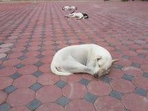 Sueño de los perros imagen de archivo libre de regalías