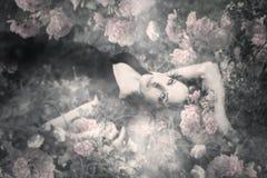Sueño de rosas foto de archivo
