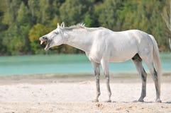 Sueño del caballo Fotografía de archivo libre de regalías