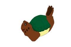 Sueño del día de la tortuga Fotografía de archivo libre de regalías