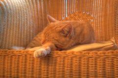 Sueño del gato Fotografía de archivo libre de regalías