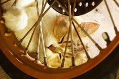Sueño del gato en el piso Imagen de archivo libre de regalías