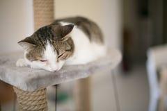 Sueño del gato en la torre para los gatos fotografía de archivo