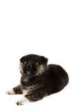 Sueño del perrito Fotos de archivo libres de regalías