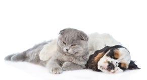 Sueño del perrito de cocker spaniel con el gatito Aislado en blanco imagenes de archivo