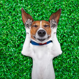 Sueño del perro Imagen de archivo