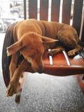 Sueño del perro Foto de archivo