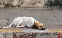 Sueño del perro en el sendero foto de archivo
