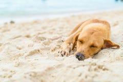 sueño del perro en la playa Fotografía de archivo