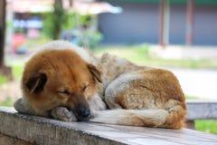 Sueño del perro en la silla de piedra imagenes de archivo