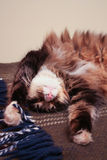 Sueño divertido del gato Imagen de archivo libre de regalías