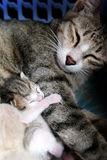 Sueño dulce Foto de archivo