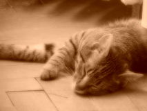 Sueño dulce Fotos de archivo libres de regalías