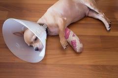 Sueño enfermo del perro Fotos de archivo