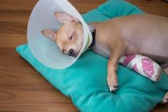 Sueño enfermo del perro Fotografía de archivo