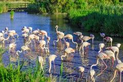 Sueño exótico pintoresco de los pájaros en la tarde Fotos de archivo libres de regalías