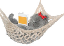 Sueño gris lindo del gatito en hamaca con el libro abierto. Imagen de archivo