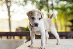 Sueño joven del perro en la tabla fotografía de archivo libre de regalías