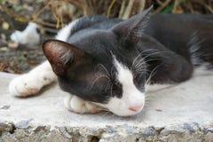 Sueño lindo del gato negro en piso del cemento fotografía de archivo