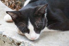 Sueño lindo del gato negro en piso del cemento foto de archivo