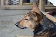 Sueño lindo del perro foto de archivo libre de regalías