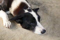 Sueño lindo del perro en piso del cemento fotografía de archivo
