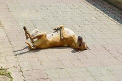 Sueño lindo del perro en piso del ladrillo imagen de archivo libre de regalías