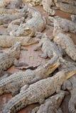Sueño múltiple del cocodrilo en agua Foto de archivo