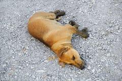 Sueño marrón lindo del perro en el piso de piedra fotos de archivo