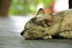 Sueño perdido del gato Fotos de archivo