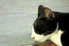 Sueño perdido del gato Imagen de archivo
