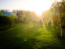Sueño verde Fotos de archivo