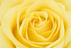 Sueños 2 de Rose Imágenes de archivo libres de regalías