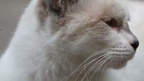 Sueños blancos del gato del color inusual en cierre de la calle encima de la visión almacen de video