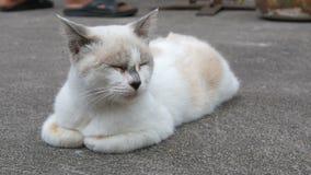 Sueños blancos del gato del color inusual en cierre de la calle encima de la visión almacen de metraje de vídeo