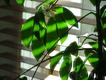 Sueños de la planta Imágenes de archivo libres de regalías