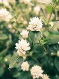 Sueños de las flores Fotos de archivo libres de regalías