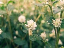 Sueños de las flores Foto de archivo