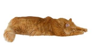 Sueños del gato Imagen de archivo libre de regalías