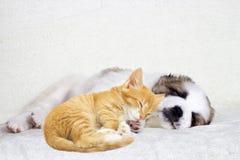 Sueños del perrito y del gatito Imagen de archivo libre de regalías