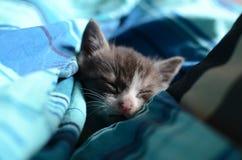Sueños dulces Fotos de archivo libres de regalías