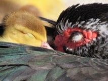 Sueños dulces Fotografía de archivo libre de regalías