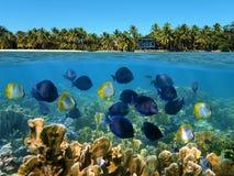 Sueños en las zonas tropicales Foto de archivo libre de regalías