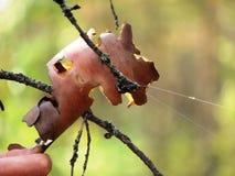 Sueños grandes de la araña Fotografía de archivo libre de regalías